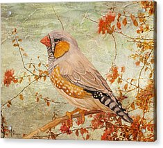 Zebra Finch Among Almond Trees Acrylic Print