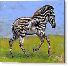 Zebra Foal  Acrylic Print by Svetlana Ledneva-Schukina