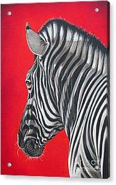 zebra in African sun Acrylic Print by Ilse Kleyn