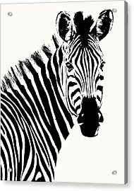 Zebra In Graphic Black And White Acrylic Print