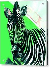 Zebra In Green Acrylic Print