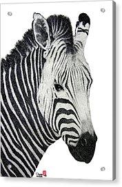 Zebra Acrylic Print by Joung Sik Chun