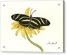 Zebra Longwing Butterfly Acrylic Print