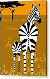 Zebra Mare With Baby Acrylic Print