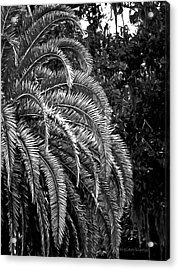 Acrylic Print featuring the photograph Zebra Palm by DigiArt Diaries by Vicky B Fuller
