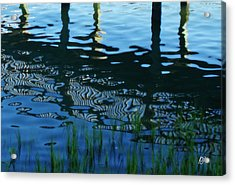 Acrylic Print featuring the photograph Zebra Reflections by Phil Mancuso