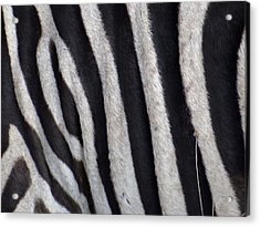 Zebra Skin Closeup Acrylic Print