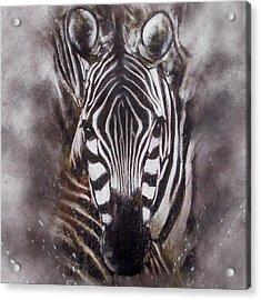 Zebra Splash Acrylic Print