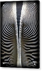 Acrylic Print featuring the photograph Zebra Stripes by Heiko Koehrer-Wagner