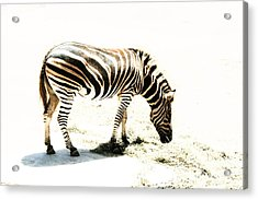 Zebra Stripes Acrylic Print by Stephen Mitchell