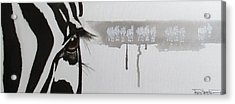 Zebra Tears Acrylic Print