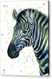 Zebra Watercolor Blue Green  Acrylic Print by Olga Shvartsur