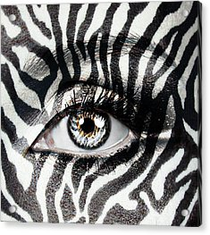Zebra  Acrylic Print by Yosi Cupano