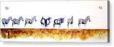Zebras And Wildebeest 2 Acrylic Print