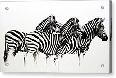 Zebras - Black And White Acrylic Print