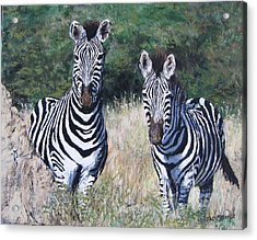 Zebras In South Africa Acrylic Print