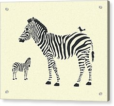 Zebras Acrylic Print by Jazzberry Blue