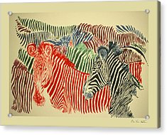 Zebras Of A Different Color Acrylic Print