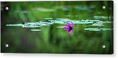 Zen Blossom Acrylic Print