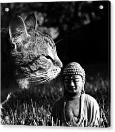 Zen Cat Black And White- Photography By Linda Woods Acrylic Print by Linda Woods
