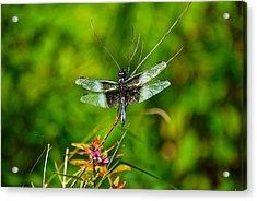 Zen Dragonfly 2 Acrylic Print