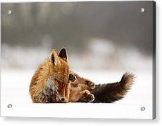 Zen Fox Series - Comfortably Fox Acrylic Print