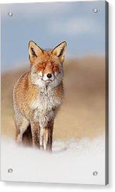 Zen Fox Series- Smiling Fox In The Snow Acrylic Print