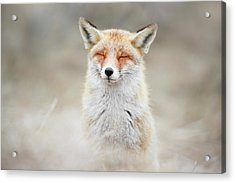 Zen Fox Series - What Does The Fox Think? Acrylic Print by Roeselien Raimond
