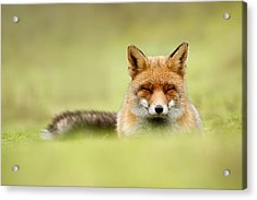 Zen Fox Series - Zen Fox In A Sea Of Green Acrylic Print by Roeselien Raimond