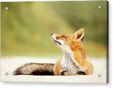 Zen Fox Series -zen Summer Fox Acrylic Print