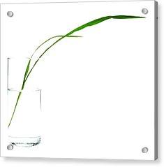 Zen Grass Acrylic Print