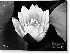 Waterlily Rising Acrylic Print