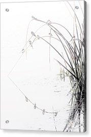 Zen Streamside Acrylic Print