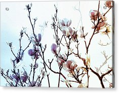 Zen Thoughts Acrylic Print by Elaine Manley