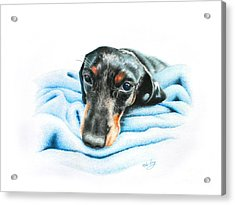 Acrylic Print featuring the drawing Zeus by Mike Ivey