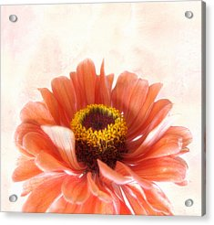 Acrylic Print featuring the photograph Zinnia Bright by Louise Kumpf