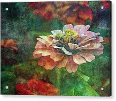 Zinnia Impression 1120 Idp_2 Acrylic Print