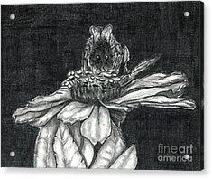 Zinnia Acrylic Print by Joy Neasley