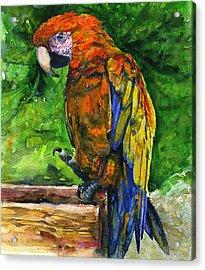 Zoo In St. Maarten Acrylic Print