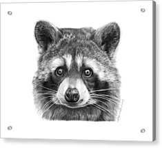 Acrylic Print featuring the drawing 046 Zorro The Raccoon by Abbey Noelle