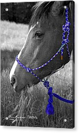 Acrylic Print featuring the photograph Zorro's Afternoon Snack by AnnaJanessa PhotoArt