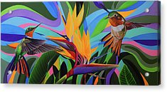 Zumbador Canela Acrylic Print by Angel Ortiz