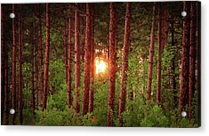 010 - Pine Sunset Acrylic Print