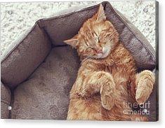A Ginger Cat Sleeps In His Soft Cozy Acrylic Print by Alena Ozerova