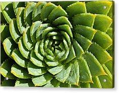 Aloe_polyphylla_8536.psd Acrylic Print
