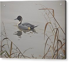 Acrylic Print featuring the painting Ankeny Pintail by Peter Mathios