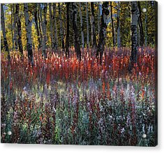 Autumn Light Acrylic Print by Leland D Howard