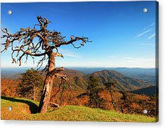 Acrylic Print featuring the photograph Autumn Scenic Drive Along The Blue Ridge Parkway In North Caroli by Dee Browning