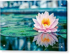 Beautiful Pink Lotus, Water Plant With Acrylic Print