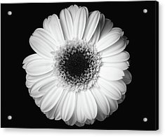 Black And White Flower Acrylic Print